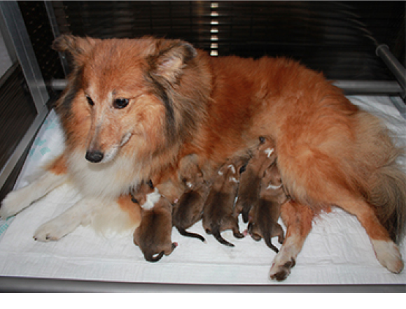 Begin Augustus 2014 Puppies Verwacht!