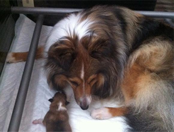 Omstreeks 13 Januari 2014 Puppies Verwacht!
