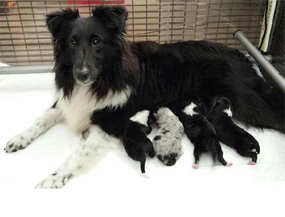 Medio Juli 2014 Puppies Verwacht!