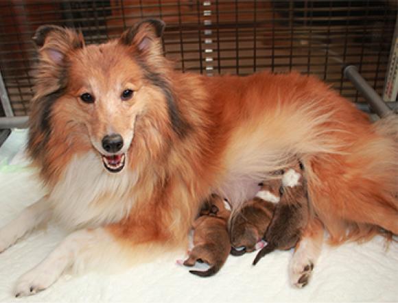 Pups Amy 2013